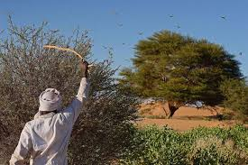 FAO: Frenar las Plagas y Enfermedades en la Cadena Alimentaria Requiere una Acción Concentrada